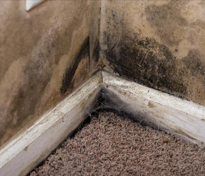 Mold infestation on carpet in a corner