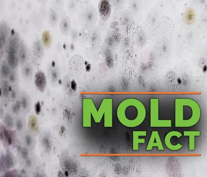 Mold Remediation Understanding the Key Differences Between Mold and Mildew